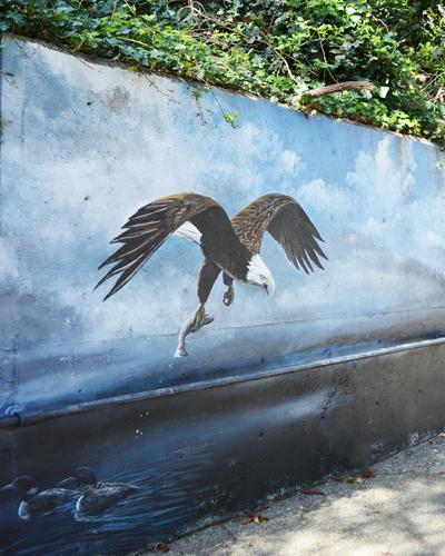 Eagle Wall Mural